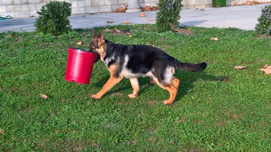 6 month sorcha carrying bucket